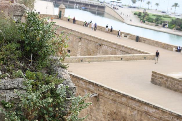 programme pour visiter Majorque avec un bébé
